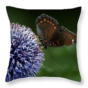 Red Spotted Purple Butterfly Gathering Nectar  Throw Pillow