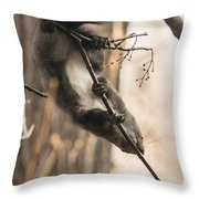 Red Squirrel - Balance Throw Pillow