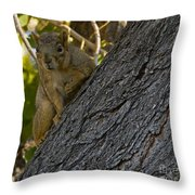 Red Squirrel   #1733 Throw Pillow