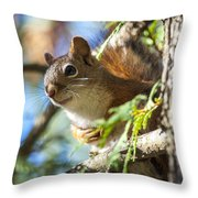 Red Squirrel In The Sun Throw Pillow