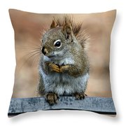 Red Squirrel On Patio Chair II Throw Pillow