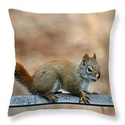Red Squirrel On Patio Chair Throw Pillow