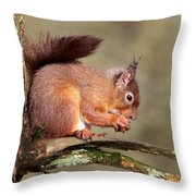 Red Squirrel Perched Portrait Throw Pillow