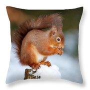 Red Squirrel Portrait Throw Pillow