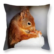 Red Squirrel With Nut In Snow Throw Pillow