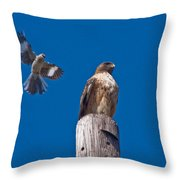 Red Tail And Friend Throw Pillow