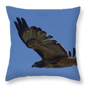 Red-tail Hawk  #7602 Throw Pillow