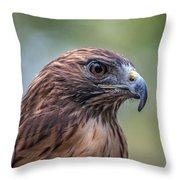 Red Tail Hawk Throw Pillow by John Haldane