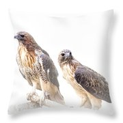 Red Tail Hawk Pair On White Background Throw Pillow
