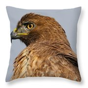 Red Tail Hawk Portrait Throw Pillow