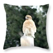 Red Tail Hawk Waiting On A Pole Throw Pillow
