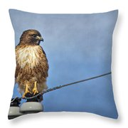 Red Tail On Watch Throw Pillow
