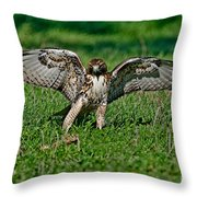 Red-tailed Hawk & Gopher Snake Throw Pillow