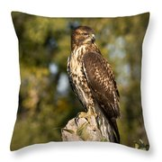 Red Tailed Hawk 1 Throw Pillow