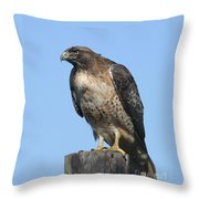 Red-tailed Hawk Monterey California  2008 Throw Pillow