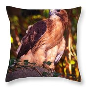 Red Tailed Hawk - 53 Throw Pillow