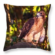 Red Tailed Hawk - 54 Throw Pillow