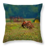 Red-tailed Hawk Throw Pillow