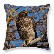 Red-tailed Hawk In A Willow Tree Throw Pillow
