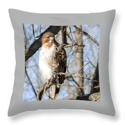 Red-tailed Hawk Looking Throw Pillow