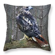 Red Tailed Hawk Perched On A Rock Throw Pillow