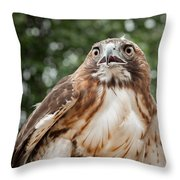 Red-tailed Hawk Square Throw Pillow by Bill Wakeley