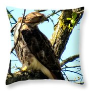 Red Tailed Interest Throw Pillow