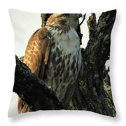 Red Tailed Morning Throw Pillow
