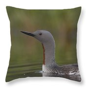 Red-throated Loon In Breeding Plumage Throw Pillow