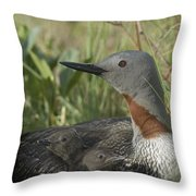 Red-throated Loon With Day Old Chicks Throw Pillow