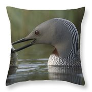 Red-throated Loon With Fish Alaska Throw Pillow