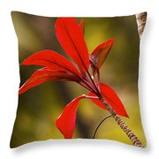 Red Ti Leaves Throw Pillow