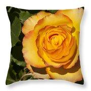 Red-tipped Yellow-orange Rose Throw Pillow