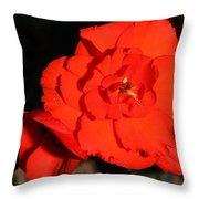 Red Tuberous Begonia Flower Throw Pillow