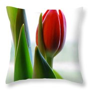 Red Tulip Day 1 Throw Pillow