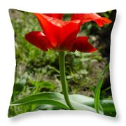 Red Tulip On The Green Background Throw Pillow
