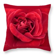 Red Velvety Rose Throw Pillow