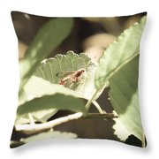 Red Wasp Throw Pillow