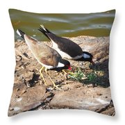 Red-wattled Lapwing Throw Pillow