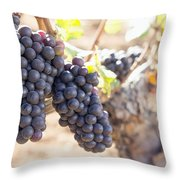 Red Wine Grapes Growing On Old Grapevine Throw Pillow