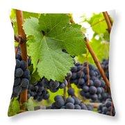 Red Wine Vineyard 3 Throw Pillow