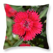 Red Winery Flower Throw Pillow