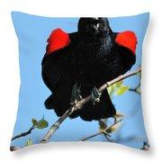 Red Wing Blackbird 1 Throw Pillow