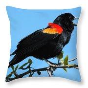 Red Wing Blackbird 2 Throw Pillow