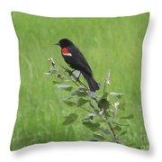 Red Wing Blackbird Throw Pillow