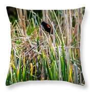 Red-winged Black Bird In The Cattails Throw Pillow