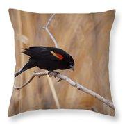 Red Winged Blackbird 1 Throw Pillow by Ernie Echols