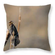 Red-winged Blackbird  Throw Pillow