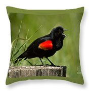 Red-winged Blackbird Singing Throw Pillow