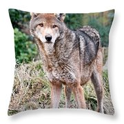 Red Wolf Alert Throw Pillow